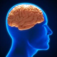 healthy-brain